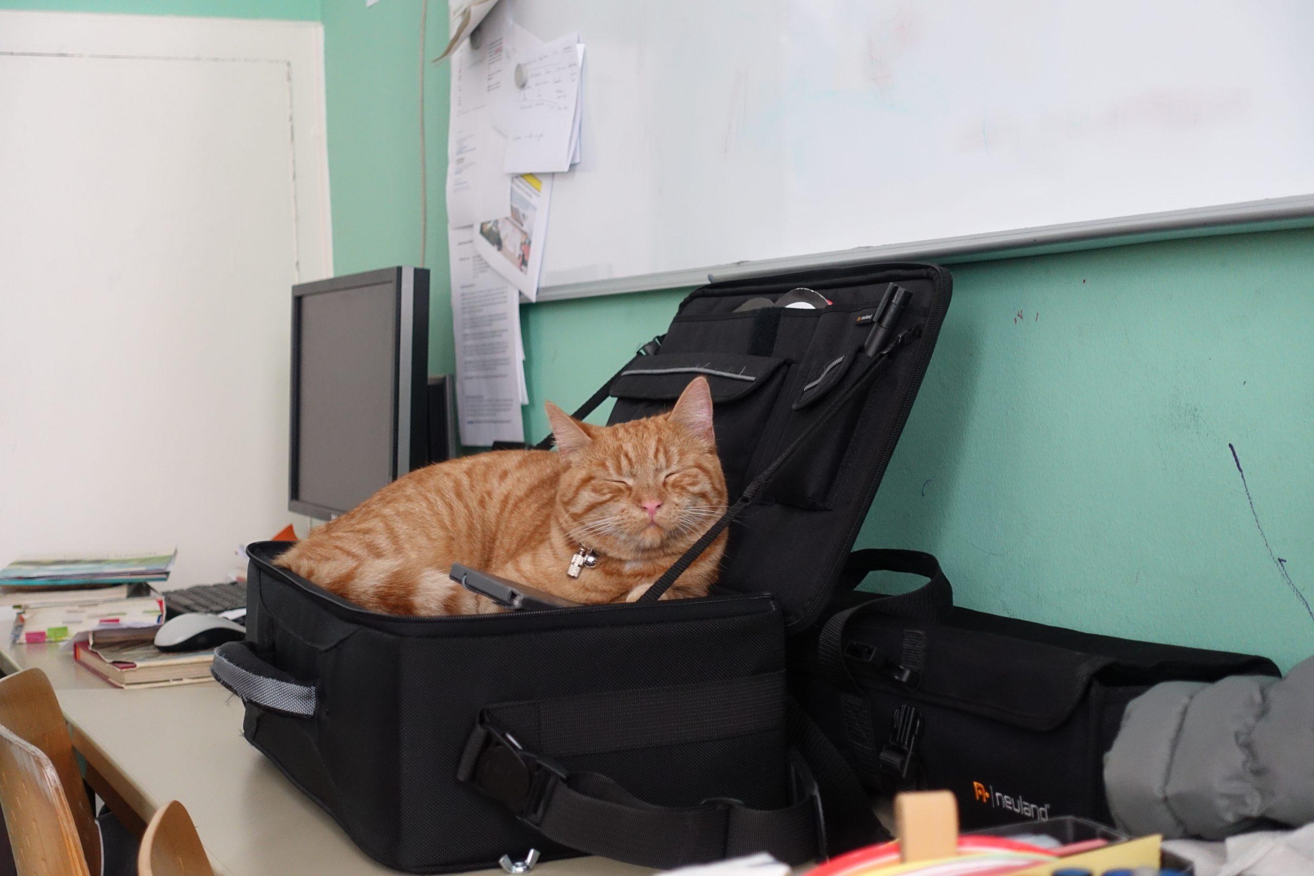 Eine schlafende Katze liegt in einer schwarzen Tasche. Die Tasche steht auf einem Tisch vor einer grünen Wand.